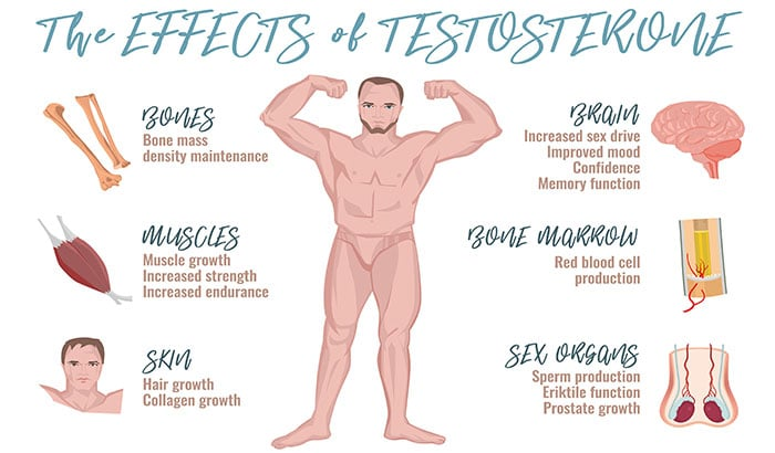 8 Effects of Testosterone on a Man's Body